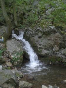 foto (4)